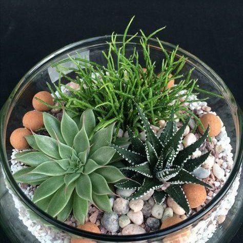 Terrarium, succulents & other plants